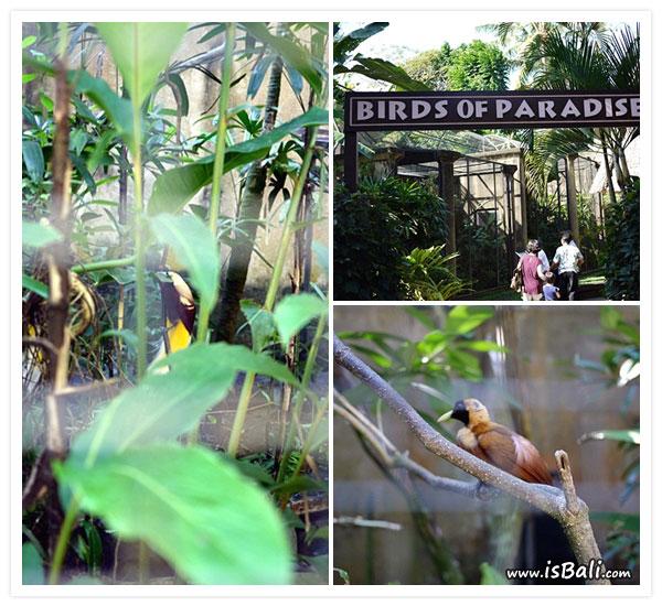 BaliBirdPark13.jpg