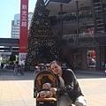 有看到聖誕樹嗎? - 在台灣,快到聖誕節時的天氣還是陽光普照