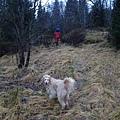 """這天我們走進挪威森林, 因為雅雅想要知道狐狸怎麼叫,她一直唱著:""""What does the fox say?"""""""
