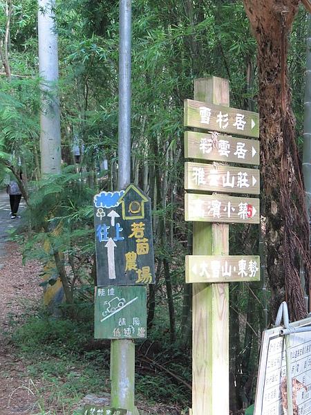 東勢大雪山 (217).jpg