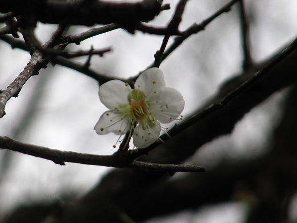 2010石門賞楓 (48).jpg