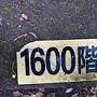 龜山島 (146).jpg