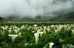 竹子湖.jpg