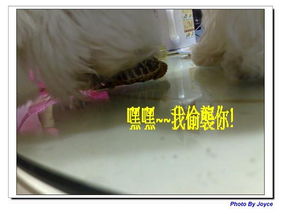 妮妮&龜太郎05.jpg
