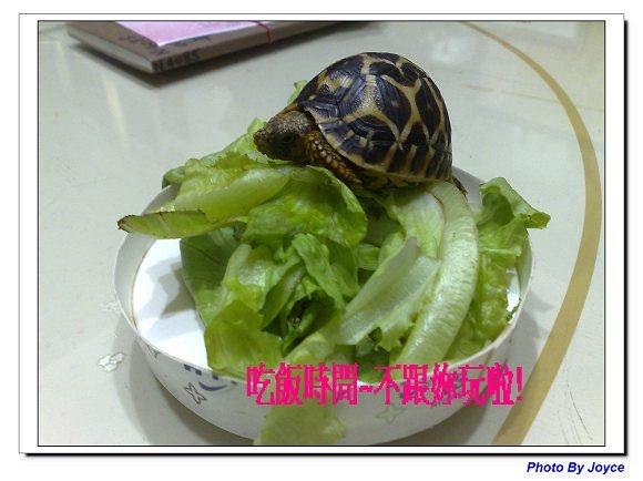 龜太郎03.jpg