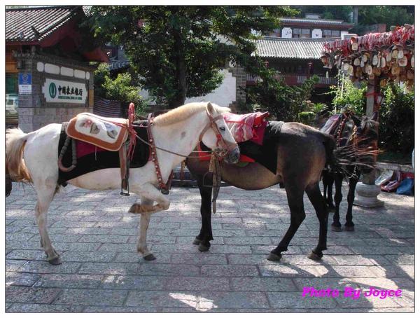 090831昆大麗D2麗江古城 (108).JPG