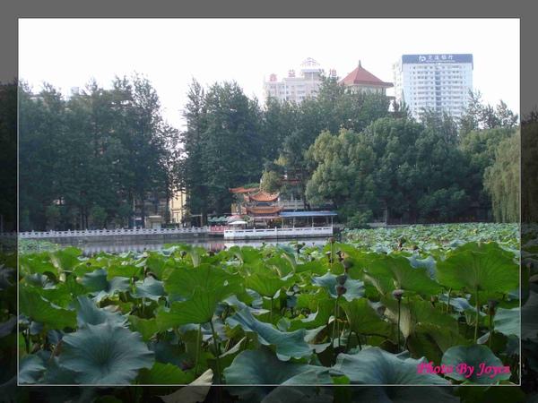 090831昆大麗D8昆明-翠湖公園 (16).JPG