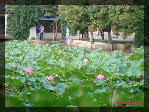090831昆大麗D8昆明-翠湖公園 (20).JPG