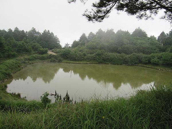 東勢大雪山 (174).jpg