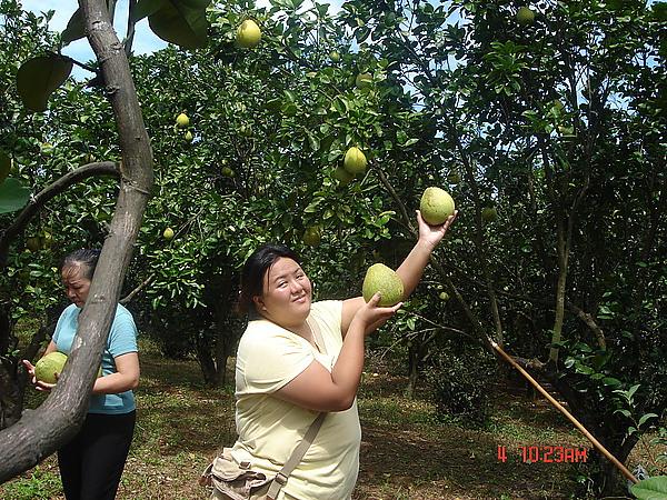 20100904三芝拔柚柚 (56).jpg