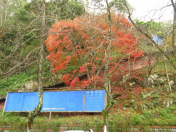 2010石門賞楓 (11).jpg