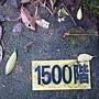 龜山島 (144).jpg