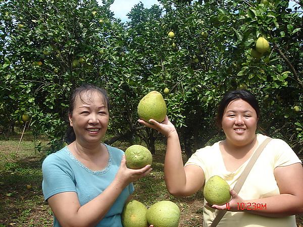 20100904三芝拔柚柚 (57).jpg