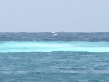 龜山島 (208).JPG