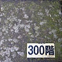 龜山島 (133).jpg