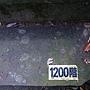龜山島 (141).jpg