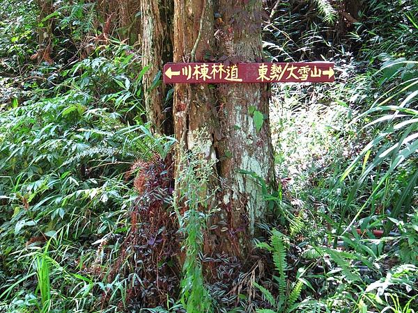 東勢大雪山 (306).jpg