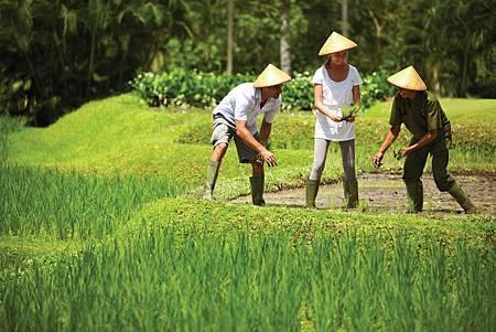 體驗一日農民生活