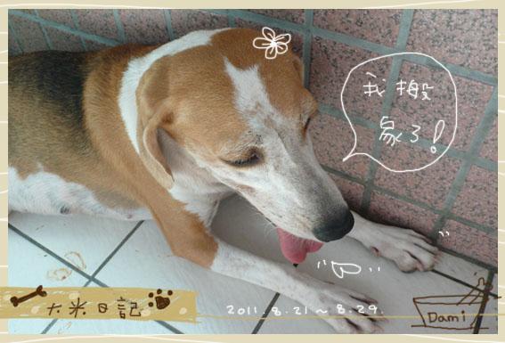 dami-art-0829-2.jpg