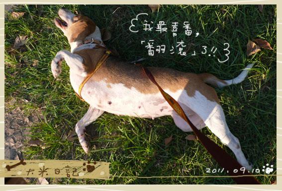 dami-art-0910-4.jpg