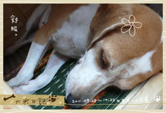 dami-art-1003-19.jpg