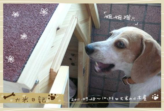 dami-art-1003-9.jpg