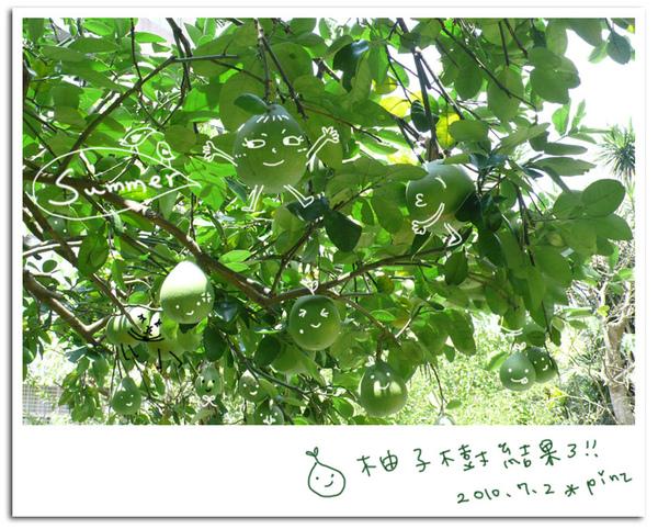 990702-tree.jpg