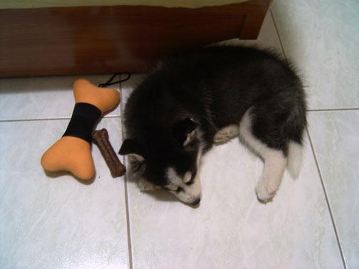 玩累了睡著的Shadow.JPG