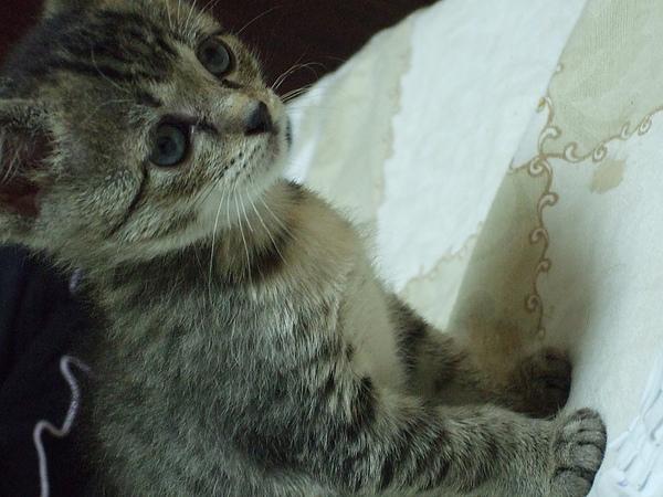 這應該就是貓咪沙龍照