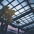 溫室裡的花朵