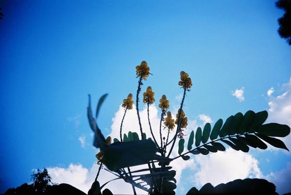士林官邸外的小花