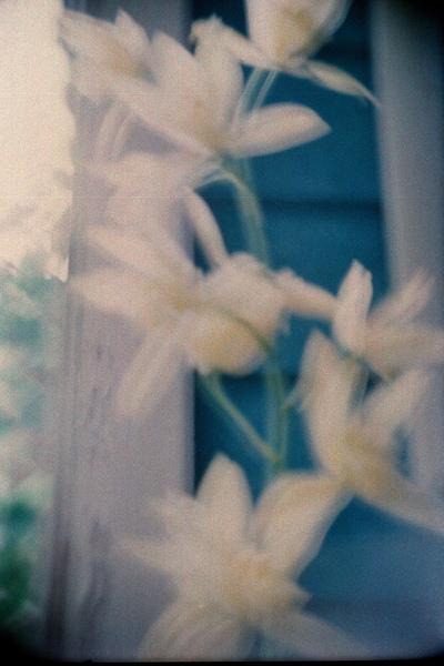 廁所外面的花...連續按了兩三次快門