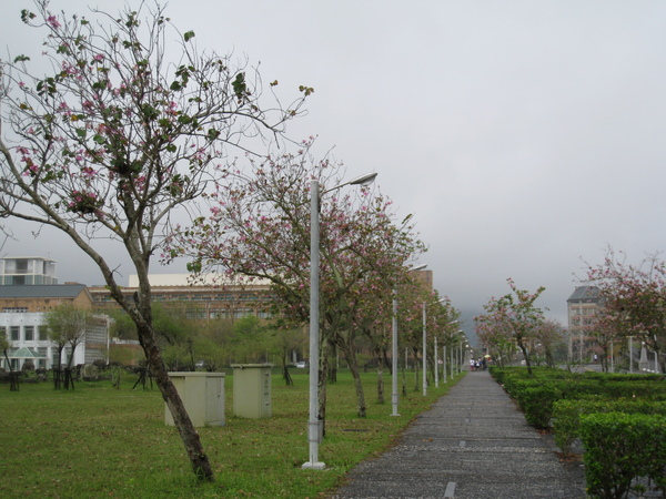 東華大學11.JPG