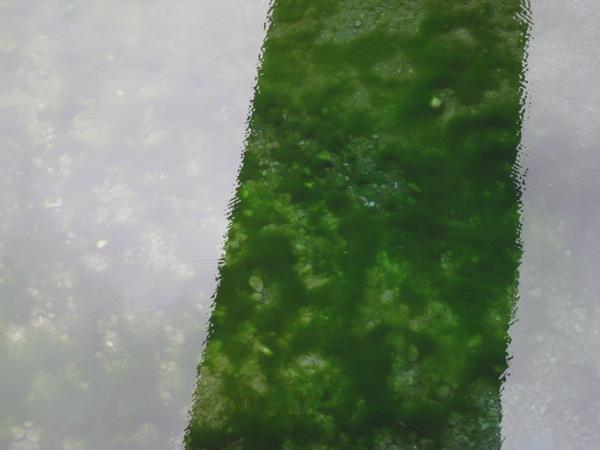 砂卡礑步道2.JPG