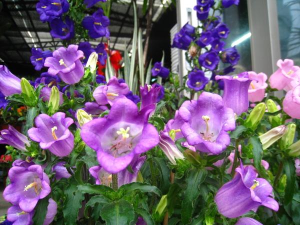 寶島花園9.JPG