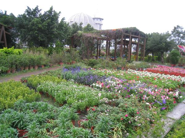 鬱金香花園3.JPG