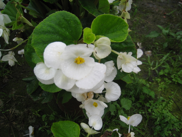 鬱金香花園5.JPG