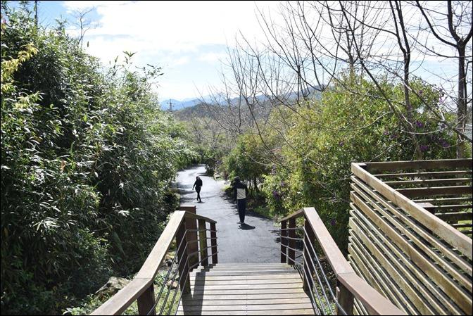 頂石棹櫻之道:走步道、賞櫻、看雲海