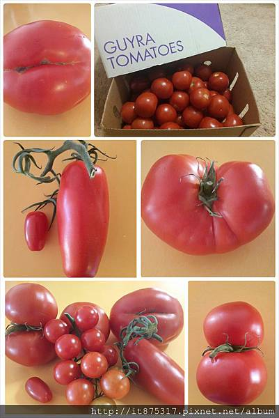 奇形怪狀蕃茄
