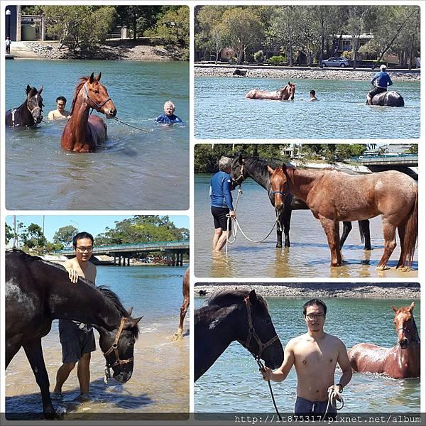 帶馬去出海口泡水