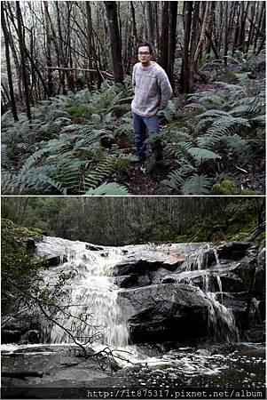 森林中散步.jpg