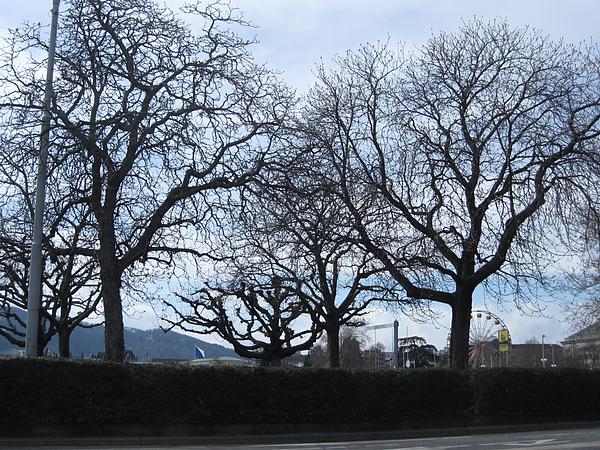 Photo-20100401-瑞士-013.jpg