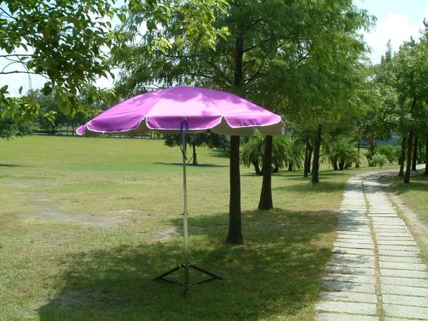 50圓全紫1.jpg