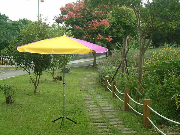 紫黃50吋正方形傘1.JPG