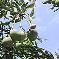 自助新村 - 水果