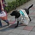 狗也會穿的反核旗