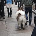 帶這麼大的狗滿特別的但不敢去拍