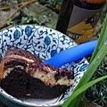 富盆子蛋糕