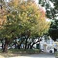 美不勝收的台中公園~樹.JPG