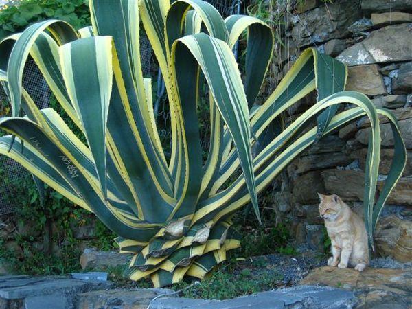 乘涼中的貓
